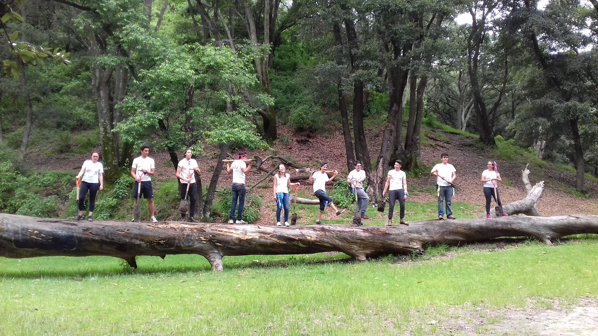Team Building: Sembremos un Bosque
