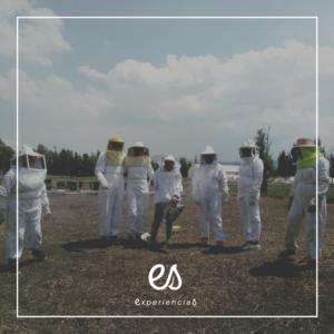Al rescate de las abejas